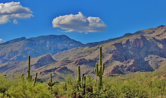 Kaktus Napole: Bahan Makanan Utama Bagi Penduduk Meksiko