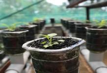 Kiat Berkebun Dalam Ruangan (Indoor)